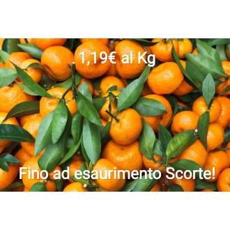 OFFERTONA! 15 Kg Mandarini...